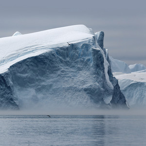 Birds flying over an iceberg under a grey, foggy sky