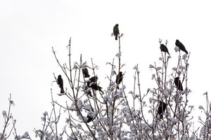 Birds On Branches 139