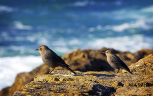 Birds On Coast
