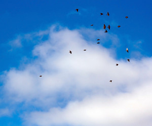 Birds On Sky Background