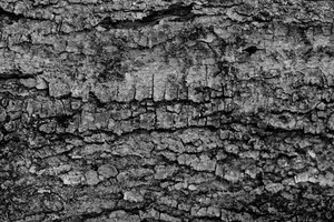 Black And White Bark 1 Texture