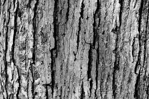 Black And White Bark 3 Texture
