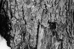 Black And White Bark 5 Texture