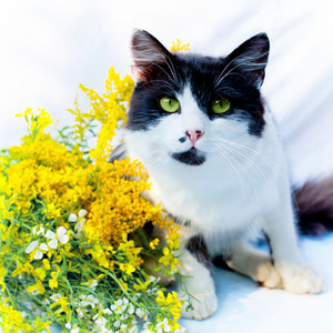 Black and white cat sitting near yellow flowers