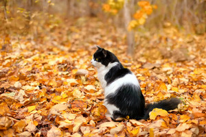 Black and white cat sitting on fallen leaves