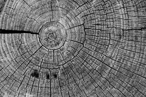 Black And White Wood 4 Texture