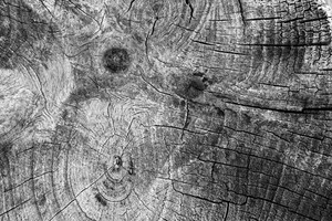 Black And White Wood 5 Texture