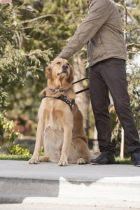 Blind man with seeing eye dog