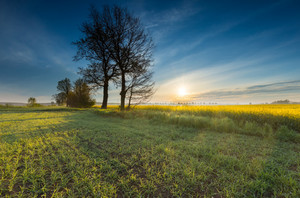 Blooming rapeseed field sunrise. Beautiful agricultural landscape of calm countryside in springtime.