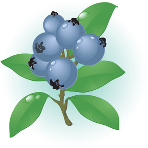 Blueberry. Vector.