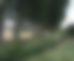 Blurred Image Background