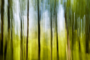 Blurred Trees