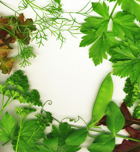 Border Of Fresh Herbs