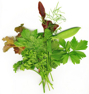 Bouquet Of Herbs On A White Background Isolated.
