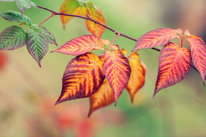 Branch with colorful leaves in autumn
