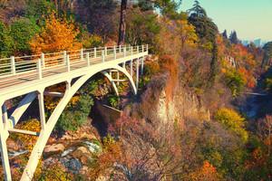 Bridge in botanical garden in Tbilisi