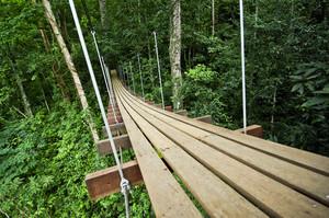 Bridge to the jungle,Thailand
