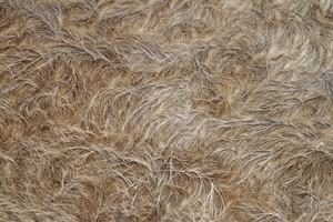 Buffalo Fur