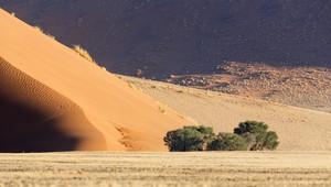 Bushes growing along a sand dune
