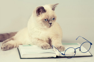 Business cat with glasses and book