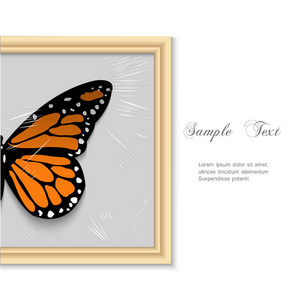 Butterfly In Wooden Frame