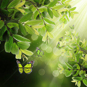 Butterfly On The Background Of The Young Spring Leaves