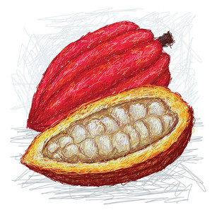 Cacao Pod Opened