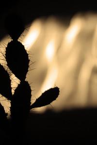 Cactus Shadow