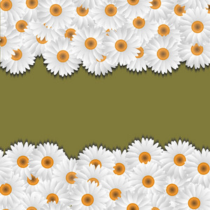 Camomile Floral Borders