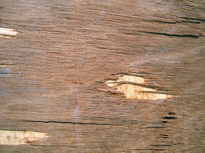 Carpentry_texture