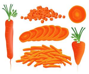 Carrot. Vector.