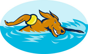 Cartoon Dog Swimming