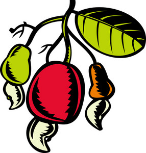 Cashew Nut And Fruit With Leaf Woodcut