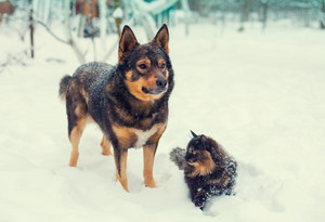 Cat and dog staying outdoors on the snow