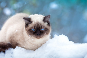 Cat cowered with snow