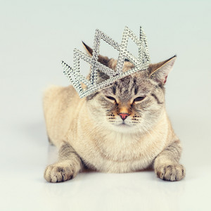 Cat crowned diadem