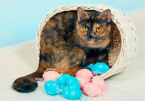 Cat in a basket with colorful eggs