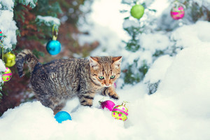 Cat on snow with Christmas decorations