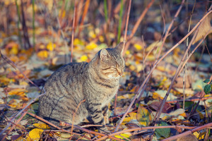 Cat relaxing in the garden in autumn