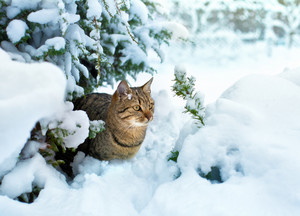 Cat siting in snow