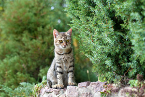 Cat siting on stone fence in the park