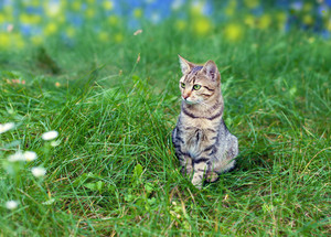 Cat sitting in a green grass
