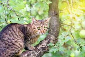 Cat sitting in a tree