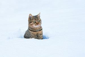 Cat sitting in deep snow