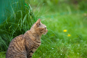 Cat sitting in the grass