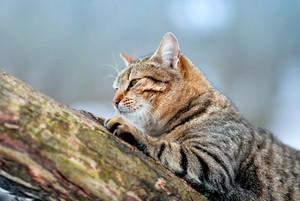 Cat sitting on a log