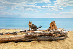 Cat sitting on a snag at the seashore