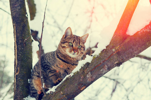 Cat sitting on a snowy tree