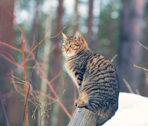 Cat sitting on a wooden post