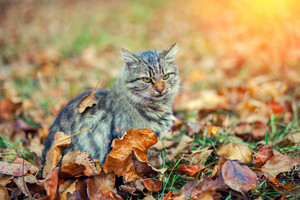 Cat sitting on fallen leaves in autumn garden